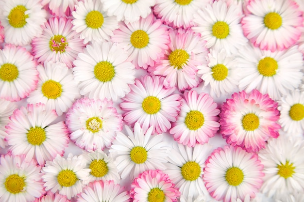 White and pink flowers background