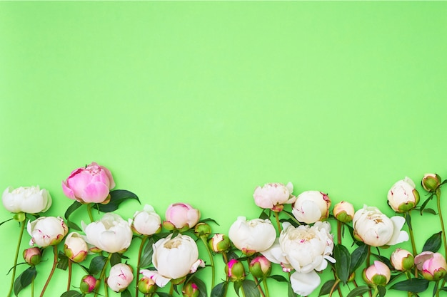 White and pink peonies on green background
