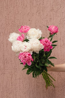White and pink peony flowers in woman's hand against wall