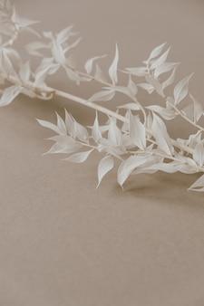 중립 파스텔 베이지 색 배경에 흰색 식물 지점