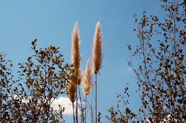 Auutmn 시즌에 흰색 식물과 푸른 하늘