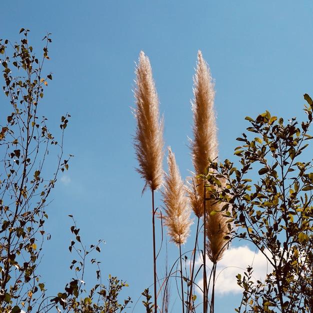 Auutmn 시즌에 흰색 식물과 푸른 하늘 프리미엄 사진