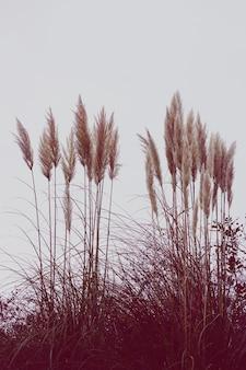 가을 시즌에 자연에 흰색 식물