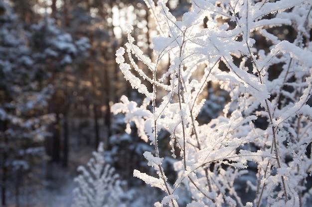 낮에 겨울 눈 덮인 숲에 흰색 식물