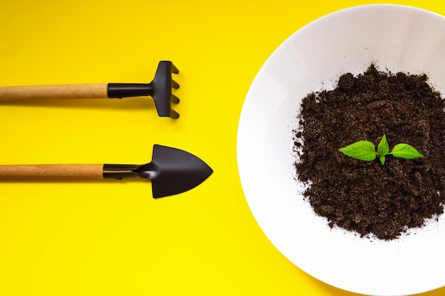 흙과 어린 녹색 자연 새싹이 있는 흰색 접시가 자라고 있고, 노란색 배경에 소형 원예 도구가 있습니다. 평면도. 가정 원예, 생태 개념입니다.