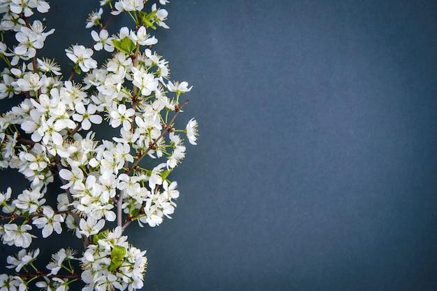 Ветка цветения белой сливы на темном фоне с копией пространства