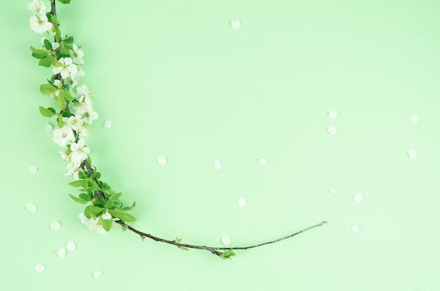 Цветет белая слива на зеленом.