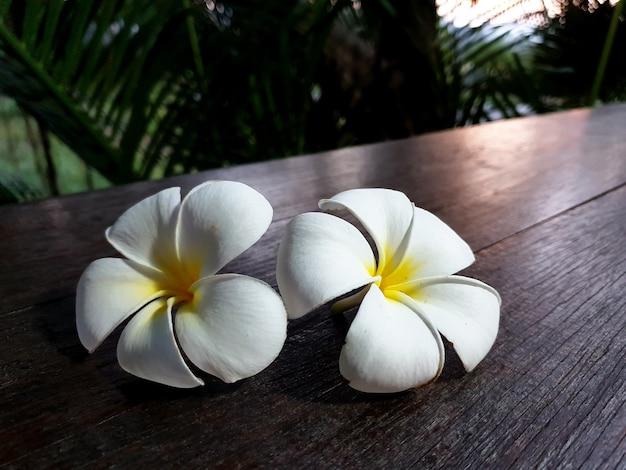 Белый цветок плюмерии на деревянном столе