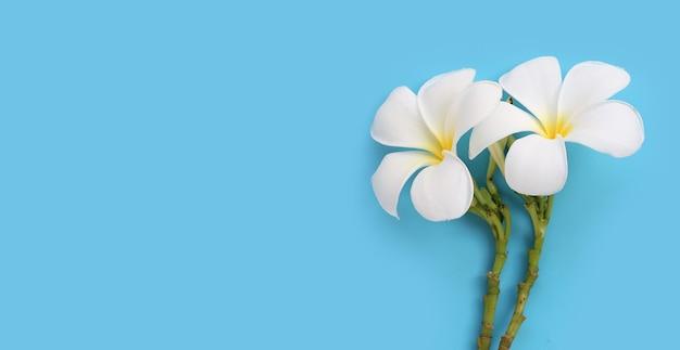 青い表面に白いプルメリアの花