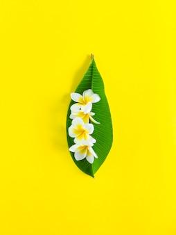 Белые цветы плюмерии на зеленых и желтых листьях