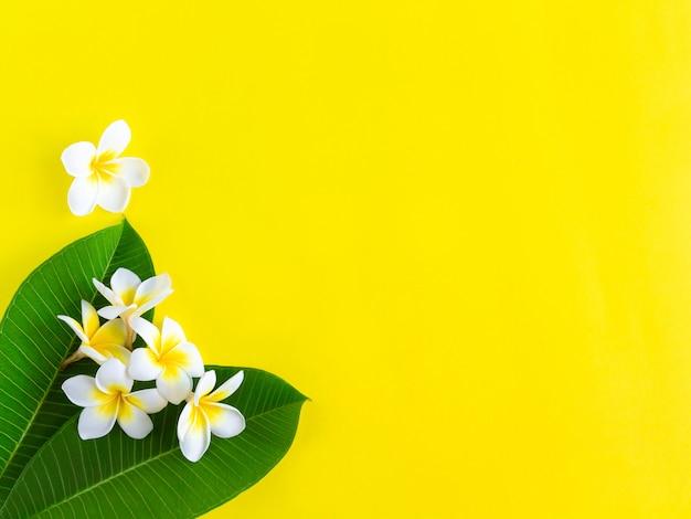 緑の葉と白いプルメリアの花