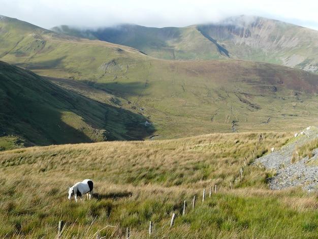 잔디로 덮인 언덕이 있는 푸른 들판을 걷고 있는 흰 조랑말