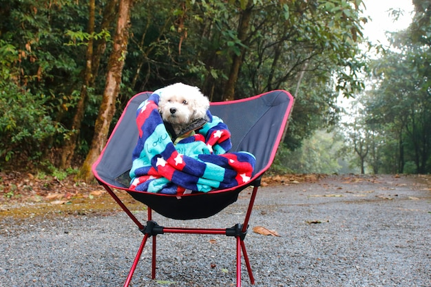 Белая собака пуделя сидя на стуле на дороге горы.