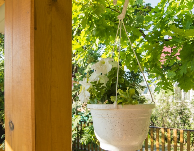 A white pot of planters with white petunia hangs on the outdoor veranda against the background of trees on a sunny summer day.