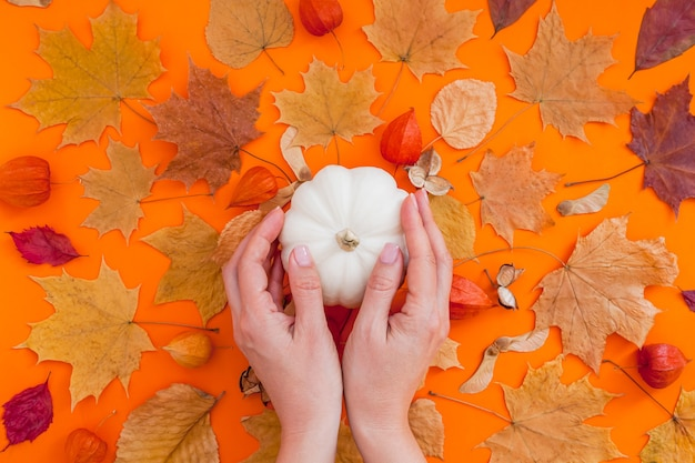 White pumpkin in female hands and dry leaves