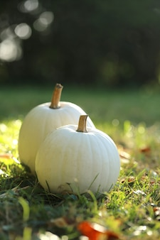 White pumpkin set on a green lawn on a blurred garden. autumn time.