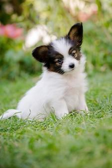 Белый щенок, крупный план
