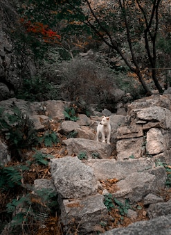 White puppy in the forest. animal in mountains