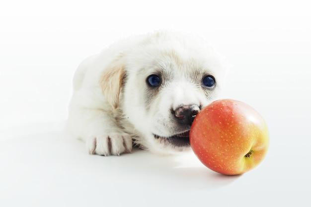 アップルと遊んでいる窓辺に白い子犬が横たわっていて、それを噛んでいます。
