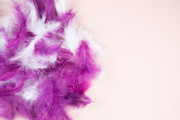 White and purple feathers closeup