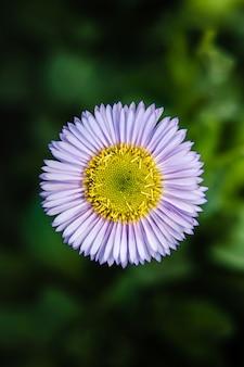 Fiore bianco e viola nella lente tilt shift