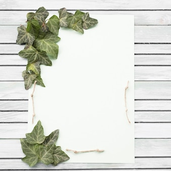 White and purple rose and green leaf on wooden background