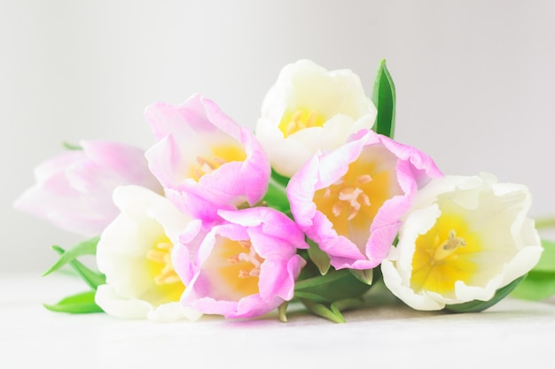 White and purple tulips on a white wooden background.