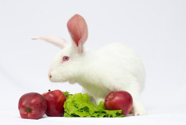 흰 토끼와 사과 흰 배경에 고립.