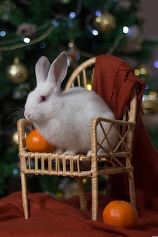 White rabbit on an armchair near a christmas tree and oranges.
