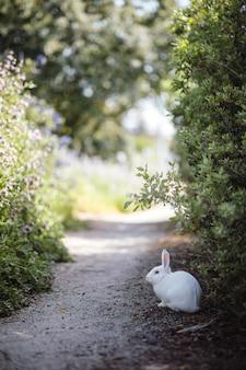 植物の横にある白いウサギ