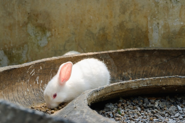 食べ物を食べる白いウサギ。動物の概念。