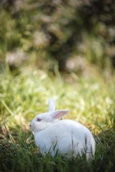 풀밭에서 흰 토끼