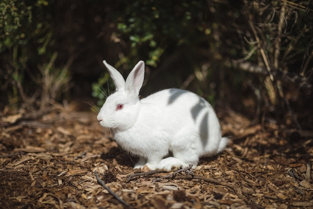 地面に白いウサギ