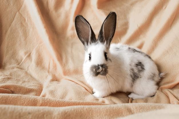 노란색 바탕에 흰 토끼입니다. 국내 동물, 애완 동물. 카피스페이스. 봄, 부활절.