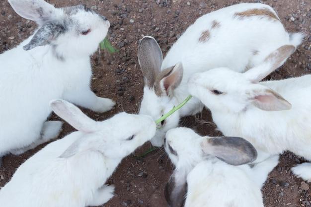 Белый кролик выберите фокус размытого фона, пара кроликов размыть фон, группа белых кроликов на полу