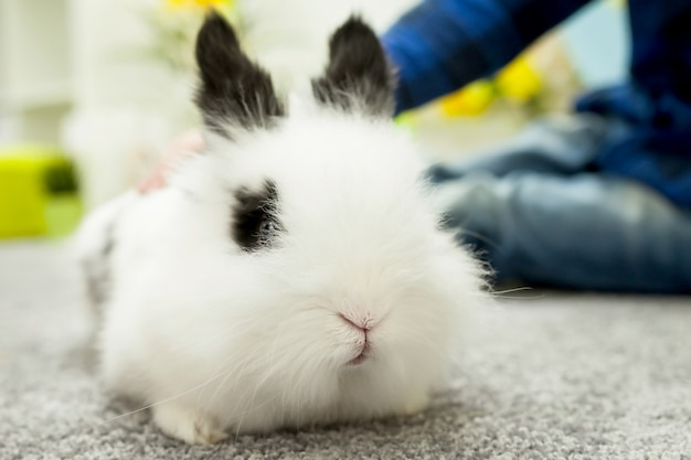 White rabbit with black ears