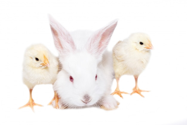 白い背景の上の鶏と白いウサギ