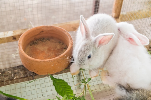 White rabbits in a cage