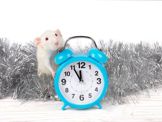 White rat and clock
