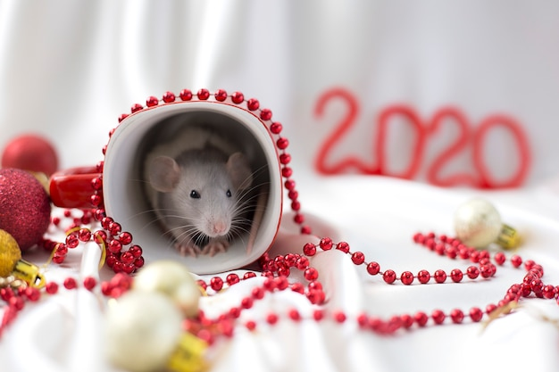 White rat sits in red cup among new year's decorations next to red inscription 2020
