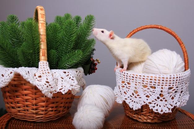 Белая крыса, символ года, в новогодних украшениях