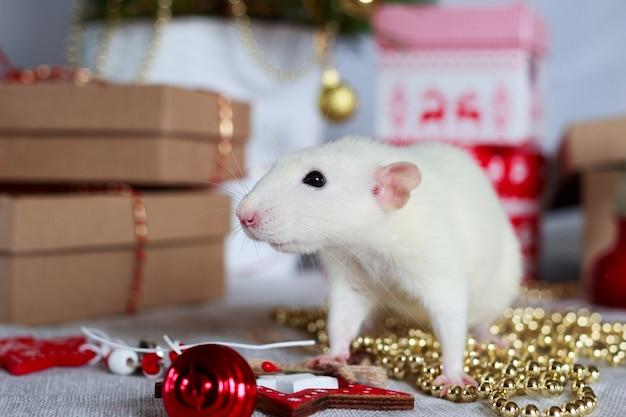 White rat symbol of year 2020