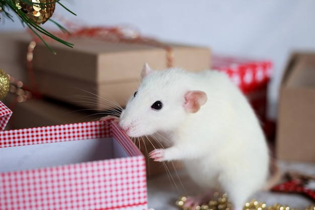 White rat symbol of year 2020.