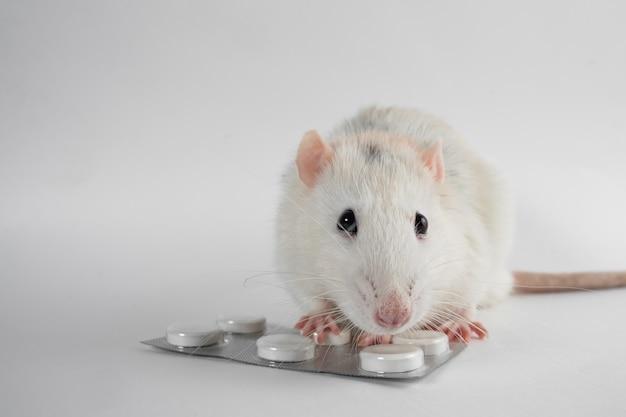 흰색 배경에 고립 된 알 약과 흰 쥐입니다. 실험용 쥐 클로즈업. 약물의 동물 실험. 의학 및 과학.