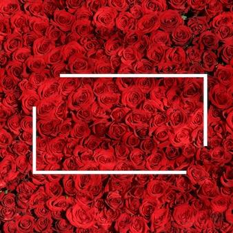 白い長方形と赤いバラのデザイン