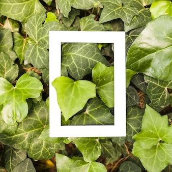 White rectangular frame over the grown ivy