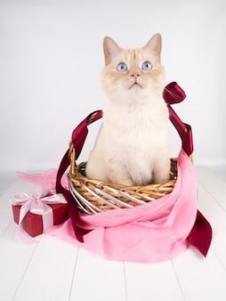 축제 고리 버들 세공 바구니에 흰색 빨간 고양이입니다.