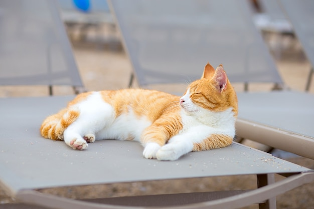 The white and red cat lies on the beach on a sun bed on the bank