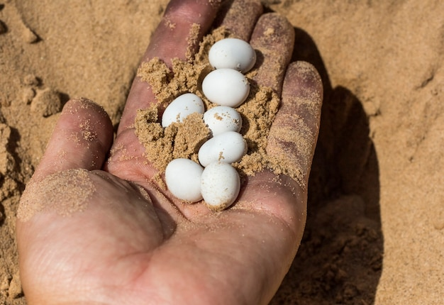 Белые яйца рептилий в грязной женской руке.