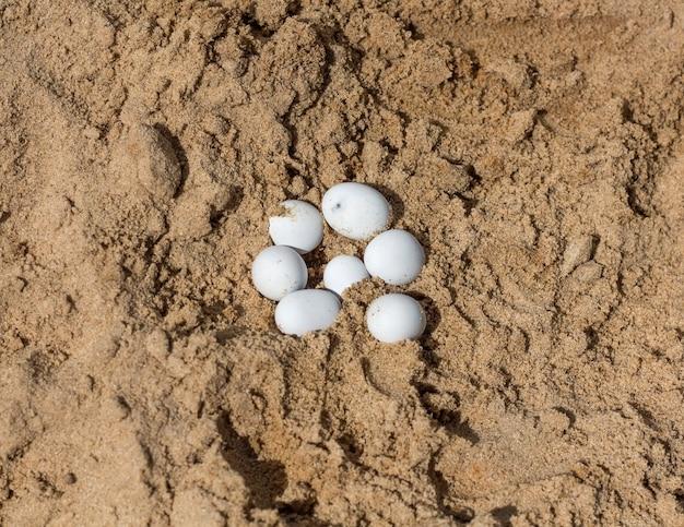 Белые яйца рептилий на желтом горячем песке.